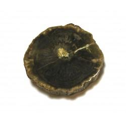 Scheibe versteinertes Holz 3-5 cm