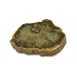 Scheibe versteinertes Holz 5-7 cm
