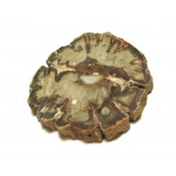 Scheibe versteinertes Holz 7-10 cm