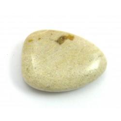 Scheibenstein versteinerte Koralle 1 Stück