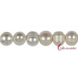 Strang rund Süßwasser-Perle AB creme-weiß (natur) 10 mm (35cm)