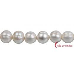 Strang rund Süßwasser-Perle AB creme-weiß (natur) ca.10-11 mm 37cm
