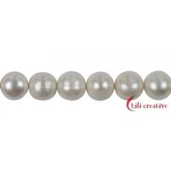 Strang rund Süßwasser-Perle AB creme-weiß (natur) 11-15 mm mit Verlauf