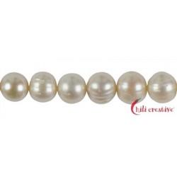 Strang rund Süßwasser-Perle A weiß 12-15 mm mit Verlauf