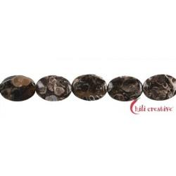 Strang Linse Achat (Turitellaachat) 14 x 10 mm