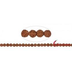 Strang Kugeln Rudraksha (rotbraun) 8 mm