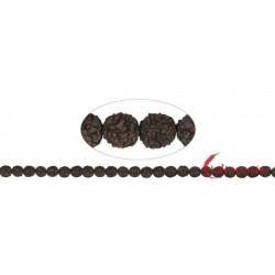 Strang Kugeln Rudraksha (schwarz/dunkelbraun) 8 mm