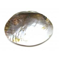 Muschel mit Perlen weiß 14 cm poliert