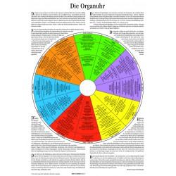 Gienger, Michael  Plakat - Die Organuhr