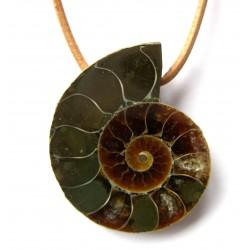 Ammonit geschnitten gebohrt 2,5-3,5 cm